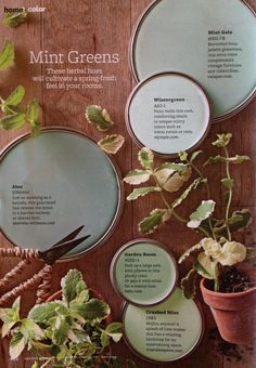 pretty minty green paint colors maybe garden room or crushed mint for the kitchen?