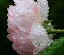 raindrops on roses . . .