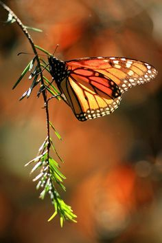 Magnificent Butterfly!