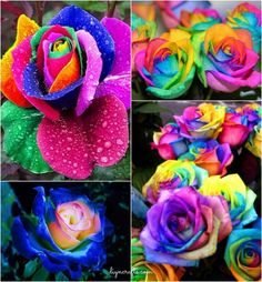How to DIY Colorful Rainbow Roses Step by Step Video Instructions! Unique diy project,