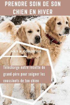 prendre soin de ton chien en hiver Dressage, Education Canine, Funny Animals, Labrador Retriever, Patience, Craft, Gardens, Rat Dog, Hair
