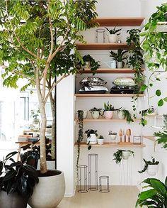 Que tal organizar o jardim em prateleiras? Misturar suculentas e espécies pendentes torna o ambiente encantador! (Via @insideoutmag) #garden #jardim #jardimdentrodecasa #jardimvertical #paisagismo #landscape