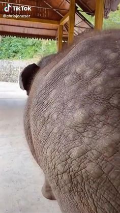 Wild Animals Videos, Baby Animal Videos, Funny Animal Videos, Funny Animal Pictures, Dog Pictures, Pet Videos, Videos Funny, Baby Elephant Video, Elephant Gif