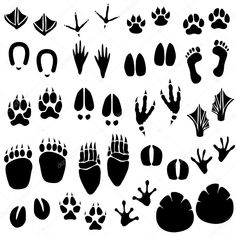 Buy Animal Footprint Track Vector by Leremy on GraphicRiver. This is a set of animal footprint track in vector. There is a pair of foot print (left and right) for each of the ani. Icon Set, Logo Animal, Animal Footprints, Animal Tracks, Clip Art, Pictogram, Drawings, Artwork, Animals