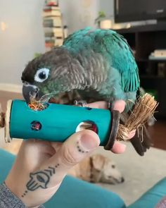This foraging foot toy will stimulate your bird's foraging interest. Planet Pleasures Foot Toys are known to be the safest and healthiest bird toys. Diy Parrot Toys, Diy Bird Toys, Funny Birds, Cute Birds, Cockatiel Toys, Budgies, Homemade Bird Toys, Conure Bird, Diy Bird Cage