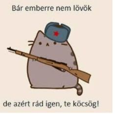 Pusheen Cat, Grumpy Cat, Funny Moments, Cute Wallpapers, Puns, The Funny, Haha, Funny Pictures, Hilarious
