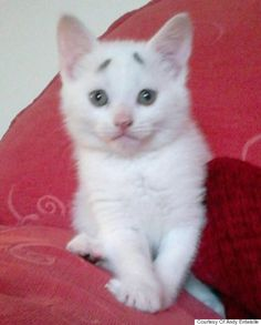 This kitten's raised eyebrows make him look constantly concerned