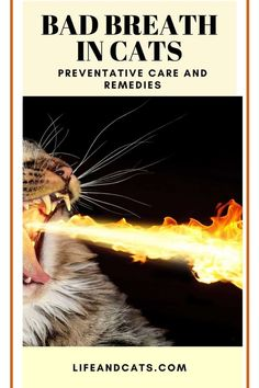 Bad breath in cats is often an early indicator of a dental problem or underlying heath issue. We discuss causes, other symptoms and preventative dental care Sick Kitten, Kitten Care, Cat Care Tips, Pet Care, Cat Cpr, Cat Bad Breath, Healthy Cat Food, Cat Diet