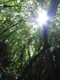 From the forests floor looking up