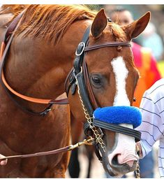 Justify, winner of the 2018 Kentucky Derby. Beautiful Horse Pictures, Most Beautiful Animals, Beautiful Horses, Pretty Horses, The Belmont Stakes, Thoroughbred Horse, Horse Horse, Derby Horse, Triple Crown Winners