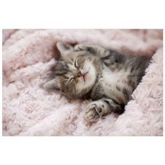 $27.45 · Bring artwork to your home with Kitten Sleeping On Towel by Eazl. This Canvas Gallery Wrap is a wonderful addition to fill the blank spaces on your wall. This colorful and artistic wall decor is…