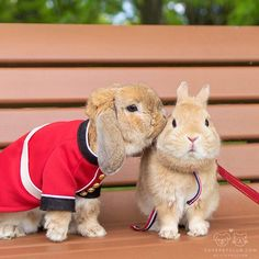 """From @mumitan: """"A peck on the cheek. This is Pui, costumed bunny, and his friend Nobunaga."""" #cutepetclub"""