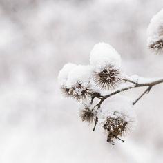 Ah comme la neige a neigé. I Love Snow, I Love Winter, Winter Is Coming, Winter Snow, Winter White, Winter Christmas, Cozy Winter, Winter Colors, Christmas Plays