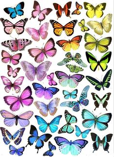 Wafer paper (rice paper) : teoria , tutorials e templates L Wallpaper, Disney Phone Wallpaper, Butterfly Wallpaper, Wallpaper Backgrounds, Butterfly Drawing, Butterfly Painting, Blue Butterfly, Simple Butterfly, Butterfly Images
