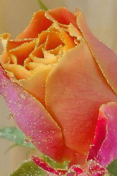 MIS FLORES: Beautiful Rose Pictures