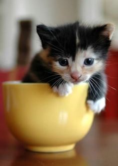 Just sharing this miniature of the pic pin cat because it's so very cute sitting there In its cup. REPIN or just ENJOY! This is EXTRA.