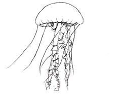 Today we will be learning how to draw a jellyfish. I always thought that a jellyfish was nothing but a simple blob– I didn't realized how many parts there are to a jellyfish, until I tried to draw one! Let's get started. What you'll need: HB (#2) Pencil, 4B pencil Eraser Drawing paper Drawing surface …