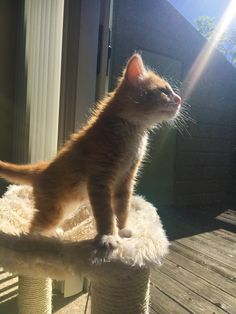 One day Simba everything the light touches will be yours.. http://ift.tt/2rnM8Fm