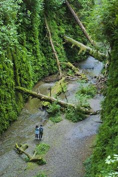 Fern Canyon - Prairie Creek Redwoods State Park, Humboldt County, CA