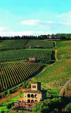mikicis:  Castello d'Albola vineyard, Radda in Chianti, Tuscany, ItalyLNAG MVC Foto Instagram