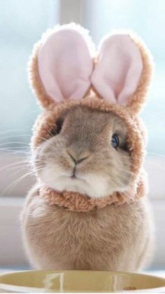So cute bunny cute baby animals, animals and pets, funny animals, coe Cute Baby Bunnies, Funny Bunnies, Cute Babies, Bunny Bunny, Pet Bunny Rabbits, Bunny Pics, Fluffy Bunny, Animals And Pets, Funny Animals