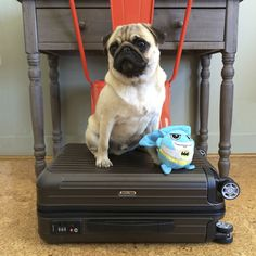 How to Choose Pet Friendly Accommodation http://www.thepugdiary.com/how-to-choose-pet-friendly-accommodation/