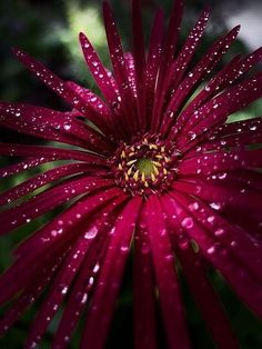New amazing flowers pics every day, be the first to see them! Fantastic flowers will make your heart open. Easily get in a great mood and feel happy all day long! Exotic Flowers, Amazing Flowers, Beautiful Flowers, Beautiful Gorgeous, Rosa Rose, Clematis, Mother Nature, Planting Flowers, Floral