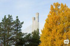 Autumn in Rovaniemi. Arctic, Finland, Magic, Autumn, Spaces, Fall Season, Fall