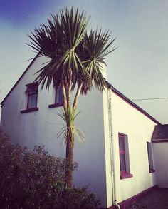 [Visit www.micefx.com for more...] This lovely house marks the start of our new project. It and it's sunny palm tree are on Valentia Island 🏝off the west coast of Ireland. It will be up on Airbnb soon and it also has some land and barns so we can do some future Irish events 🍀🎉💚#valentiaisland #kerry #wildatlanticway #wildatlanticwaykerry #ireland #kerryandbristol #bristolandireland #immersivetheatre #eventplanner #holidaycottage #irishcottage #eventprofs #meetingplanner #meetingplanner…
