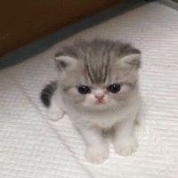 CUTE CAT GIF
