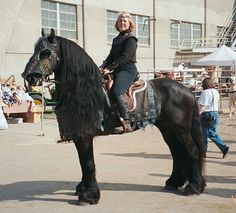 A Friesian horse at the Minnesota Horse Expo Extravaganza Horse Shows & Performances Learn about #HorseHealth #HorseColic www.loveyour.horse