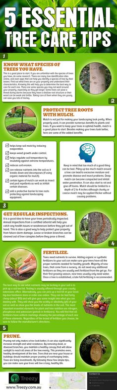 5 Essential Tree care tips by Treezy. Treezy Your Local Arborist. Treezy has become the go-to professional tree services company for residents of Brisbane's Southside expert in Tree Removal , Stump Grinding, Tree lopping, Mulching & Tree Wood chipping and Tree Cutting Services. Call now 07 3999 9851 http://www.treezy.com.au/  #treezy #treecare #tree #trimming #trimmer #treeremoval #removal #lopping #treelopping #treeservices