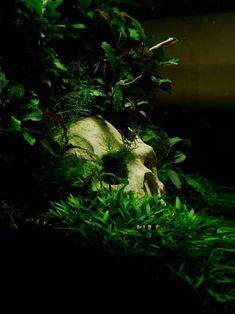 #Skull in  #Aquarium