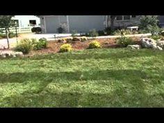 Sod Installation Wichita Kansas 3 Weeks Lawn
