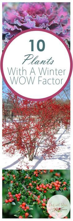 10 Plants With A Winter WOW Factor