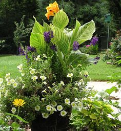 Mixed garden container Video on planting a container with cannas