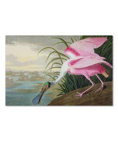 Loving this Audubon Roseate Spoonbill Wall Art on #zulily! #zulilyfinds
