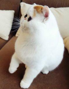 顔が平面すぎる猫wwww