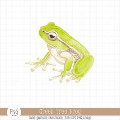 Green Tree Frog Watercolor Clipart  Rain Forest Frog by PNGMe