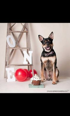 Pup's first birthday cake smash    Photo: Little Star Photography  Cake: Spoil the Dog Bakery  Props: Blue Veil Event Decor & Rentals