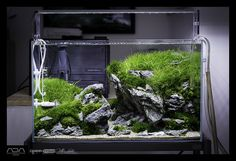 10 Tips on Designing a Freshwater Nature Aquarium Planted Aquarium, Aquarium Aquascape, Aquarium Nano, Aquarium Garden, Aquarium Landscape, Nature Aquarium, Home Aquarium, Aquariums, Betta Tank