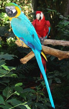 I adore tropical parrots. There so beautiful in creation