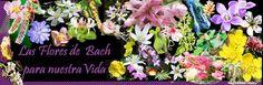flores de bach para nuestra vida