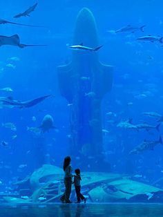 Dubai Aquarium: Experience the underwater world like never before. When you visit the Dubai Aquarium, you will get to see some of the most incredible marine creatures from up close. It is a great experience for children and adults alike. It is a one-of-its-kind aquariums around the world.