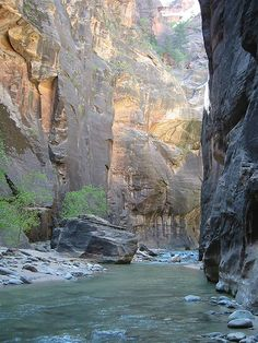 The Narrows in Zion National Park. This hike hails as one of the best hikes in the world! Mt Zion National Park, Us National Parks, National Forest, Camping Places, Places To Travel, Places To See, All Nature, Amazing Nature, Hiking The Narrows