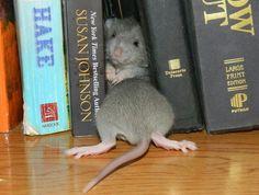 Rats n books
