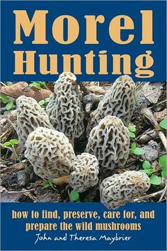 Hunting for morels by tree type...beware of the false morels!