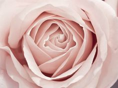 a rose by any other name is just a rose...