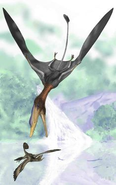 An illustrated reconstruction of the pterosaur Darwinopterus modularis. Reconstructions like these probably aren't the way the wings of these ancient flying reptiles are shaped. Wings like these wouldn't get off the giraffe sized creatures off the ground.