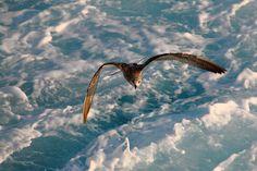 Μπορούμε να είμαστε ελεύθεροι, μπορούμε να μάθουμε πώς να πετούν!